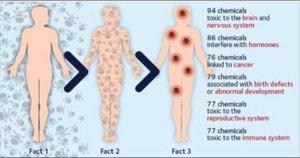 Study showing body burden